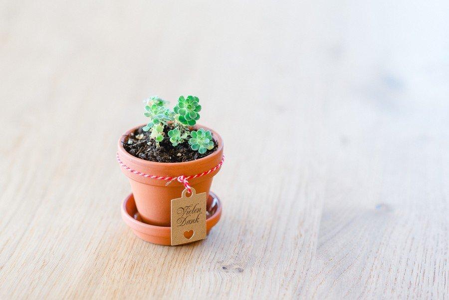 Gastgeschenk mit Mini-Pflanze und Terrakottatopf zur Hochzeit