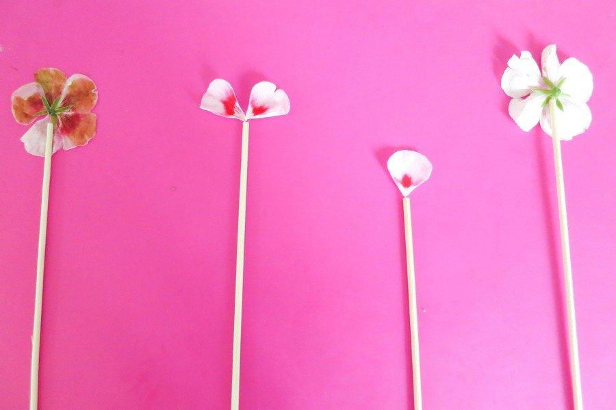 Blütenlutscher als Gastgeschenk für die Hochzeit einfach zum Selbermachen - eine schöne Idee als Alternative