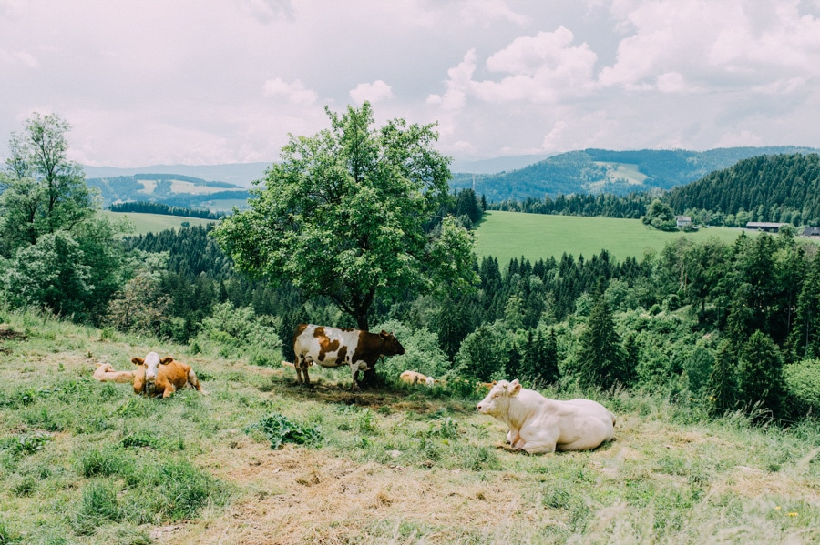 alm-hochzeit-steiermark-traditionell-tracht-2
