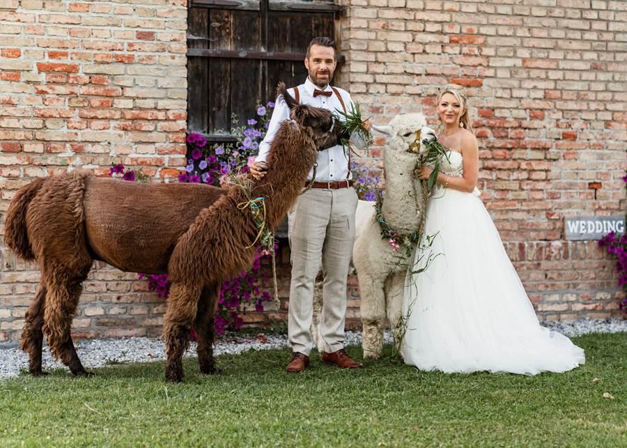 Sommerliche Hochzeit mit Alpaka und Lama