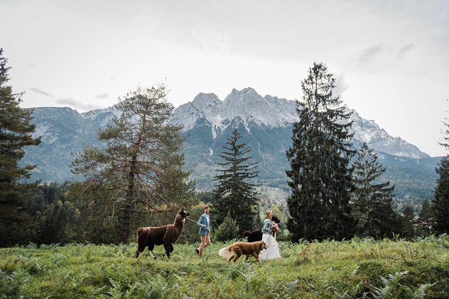Hochzeit zu zweit mit Alpakawanderung